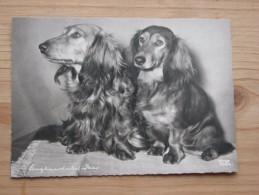 AK1024 - Langhaardackel Paar - Popp 2734 - Ungelaufen - Topp Erhalten - Hunde