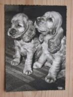 AK1025 - Zwei Junge Hunde - Popp 2251 - Ungelaufen - Topp Erhalten - Hunde