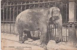 PARIS . Jardin Des Plantes . L' ELEPHANT  ( Gros Plan ) - Elephants