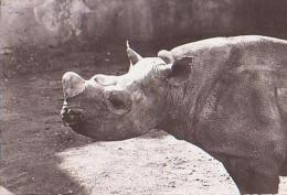 ANIMAUX Divers       H53      Rhinocéros  ( Pub Genoline ) - Rhinocéros