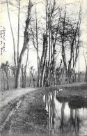 [DC3088] CPA - BIALERA STRADA ALBERI - FOTOGRAFICA - Viaggiata 1902 - Old Postcard - Botanik