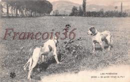 Les Pyrénées - En Arrêt C'est Du Poil Chiens - Jagd