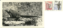 ECUADOR  Iguana Terrestre Delle Galapagos  Nice Stamps - Ecuador