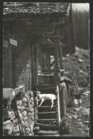 ZIEGE Alphütte Geiss Goat Chèvre Saas-Fee 1962 - Animaux & Faune