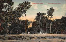 Amazonas Brazil   Manaos Bosque Municipal     A 1932 - Brésil