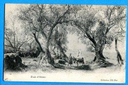 LIP334, Etude D'Oliviers, Olive, âne, Femmes Voilées, Maghrébin, Animée, Circulée 1906 - Zonder Classificatie