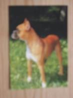AK1028 - Deutscher Boxer - Hund - Col. - Arko Kaffee Zur Freude Am Leben - Ungelaufen - Topp Erhalten - Hunde