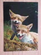 AK1037 - Füchse  - Jungfüchse - Canis Vulpes L. - Renardeaux - Young Foxes - Col. - Ungelaufen - Topp Erhalten - Tierwelt & Fauna