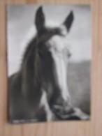 """AK1044 - Pferd - Popp 1058  -  """"Zucker Wäre Mir Lieber"""" -  Ungelaufen - Topp Erhalten - Pferde"""