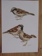 AK1080 - Spatzen - Sperling - Sparrows - Maineaux - Mussen - Col. - Ungelaufen - Topp Erhalten - Vögel