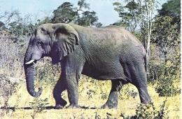 AFRICAN ELEPHANT, RHODESIA. UNUSED POSTCARD Sa4 - Éléphants