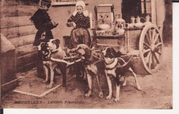 BRUXELLES -- Laitières Flamandes --  -- Un Attelage De 4 Chiens - Other