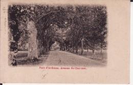 Parc D' ARDENNE . Avenue Des Charmes ( Dos NON Divisé ) - Houyet