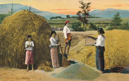 Paddy Sifting.  Copyright - The Colombo Apothecaries Co. Ltd., No. 62 - CEYLON (CEYLAN) - Circa 1910 - Sri Lanka (Ceylon)