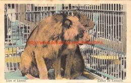 Lion Et Lionne - Lions