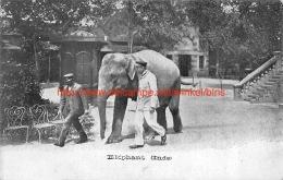 Elephant Inde - Éléphants