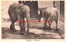 Dierentuin Antwerpen Olifant - Éléphants