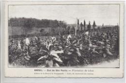 BRESIL - Etat De São Paulo - Plantation De Tabac - São Paulo