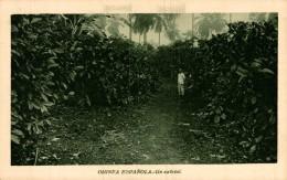 GUINEA ESPAÑOLA. UN CAFETAL - Guinea Ecuatorial