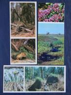 Postcards - Russia - Animals Flowers Fox - Deer - Plants - Rusland