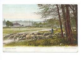 Ländliche Studie Etude Aux Champs  Moutons 1926 - Elevage