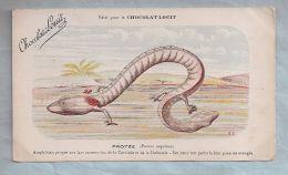 CPA - Animaux (Amphibien) - Protée (Protens Anguinus) Amphibien Propre Aux Lacs Souterrains...- Edité Pour Le Chocola... - Autres