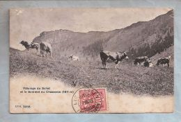 CPA - Animaux (Vache) - 3256. Paturage - Sollat - Suisse - Vaches