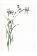 15049 - Petite Aquarelle  Narcisses (format 13 X 9) - Aquarelles