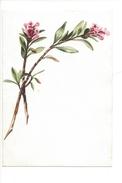 15050 - Petite Aquarelle  Rhododendron (format 13 X 9) - Aquarelles