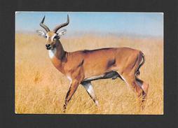 ANIMAUX - ANIMALS - FAUNE AFRICAINE - ANTILOPE - ANTELOPE - ÉDITIONS HOA QUI - Animaux & Faune