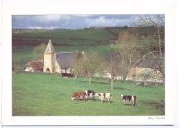 CP Normandie Le  Pays D´auge  Ref N 8669 Photo Alain Baudry Collection 12 X 17 - Other Photographers