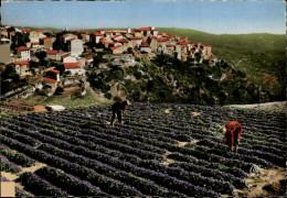 06 - TOURETTES-SUR-LOUP - Violettes - France