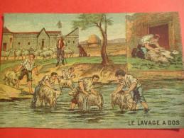 Chromo/Gravure/Métiers Du XIXéme/Image Pédagogique/Le Lavage à Dos/LEFEVRE/Vers 1870-1880      GRAV120 - Trade Cards