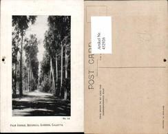 452926,India Calcutta Kalkutta Botanical Gardens Palm Avenue Palmen - Indien