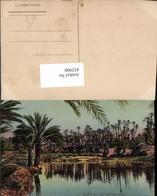 452900,Africa Dans Le Sud Au Bord D'une Riviere Fluss Palmen - Ansichtskarten