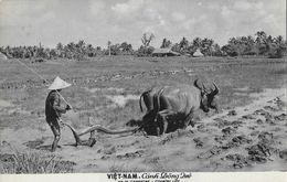 Indochine - Viet-Nam - Canh Dong Qué - Vie De Campagne (Country Life) - Edition Labaphot - Carte Non Circulée - Viêt-Nam
