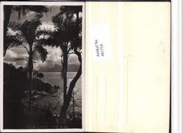 481716,Brazil Rio De Janeiro Conta De Aulo Küste Palmen - Brasilien