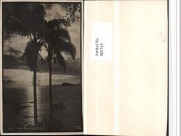 481715,Brazil Rio De Janeiro Stimmungsbild Palmen - Brasilien