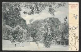 SINGAPORE Botanical Garden - Singapour