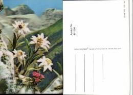 491006,3D 3 D 3-D Karte Wackelkarte Edelweiß Alpenblumen - Sin Clasificación