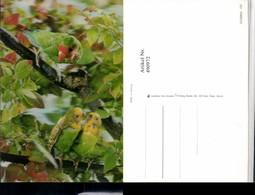 490972,3D 3 D 3-D Karte Wackelkarte Parrots Papageien Vögel - Sin Clasificación