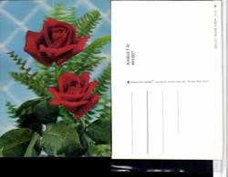 491007,3D 3 D 3-D Karte Wackelkarte Roses Before Lattice Rote Rosen - Sin Clasificación