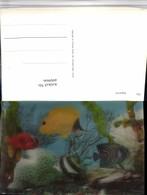 490966,3D 3 D 3-D Karte Wackelkarte Aquarium Fische - Sin Clasificación