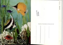 491008,3D 3 D 3-D Karte Wackelkarte Aquarium Fische - Sin Clasificación