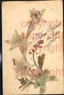 465895,Material Karte Echtes Edelweiß Schleife Alpenflora - Ansichtskarten