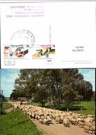 496591,Australia A Rural Scene Typifying Schafherde Schafe - Ansichtskarten