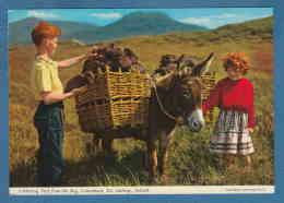 215561 / Galway - Collecting Turf From The Bog , CONNEMARA , Donkeys Anes  AND BOY LITTLE GIRL , Ireland Irlande Irland - Donkeys