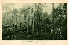 GUINEA ESPAÑOLA. UN GRAN DESBOSQUE - Guinea Ecuatorial