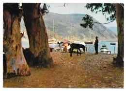 Cpsm: 20 Golfe De GIROLATA (c. Osani) Yachts à L'Ancre (ane) 1963  N° 156.20 - France