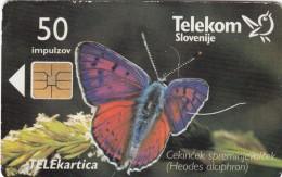 SLOVENIA SLOVENIJA PHONECARD 1998 CEKINCEK TEL.PREDAL SPOROCIL BUTTERFLIES HEODES ALCIPHRON CAT.NO. 094    TELEKOM - Slovenia